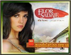 Дикий цветок - Flor Salvaje Смотреть онлайн