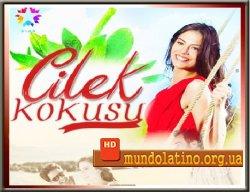 Запах клубники - Турецкий сериал смотреть онлайн